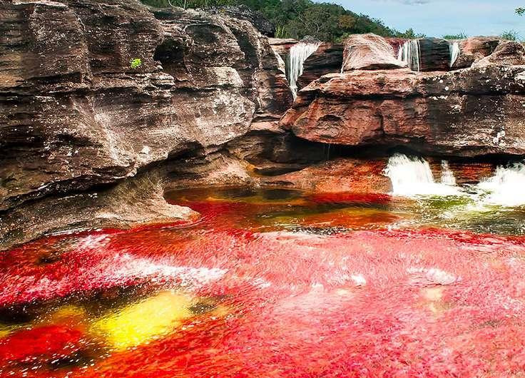 Caño cristales: el río más colorido de Colombia