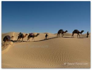 excursion desert en  dromadaire