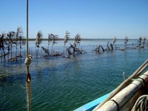 iles kerkennah pêche