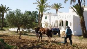 Maison d'hôtes à Djerba : le domaine