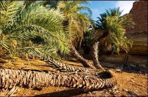 palmier © Pol Guillard