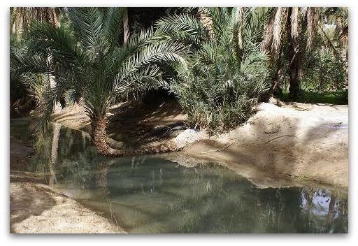 Tozeur : les oasis, derniers jardins du désert