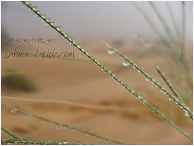 Le Sahara sous le brouillard