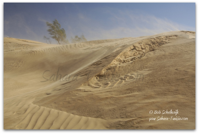 Le Sahara sous le vent