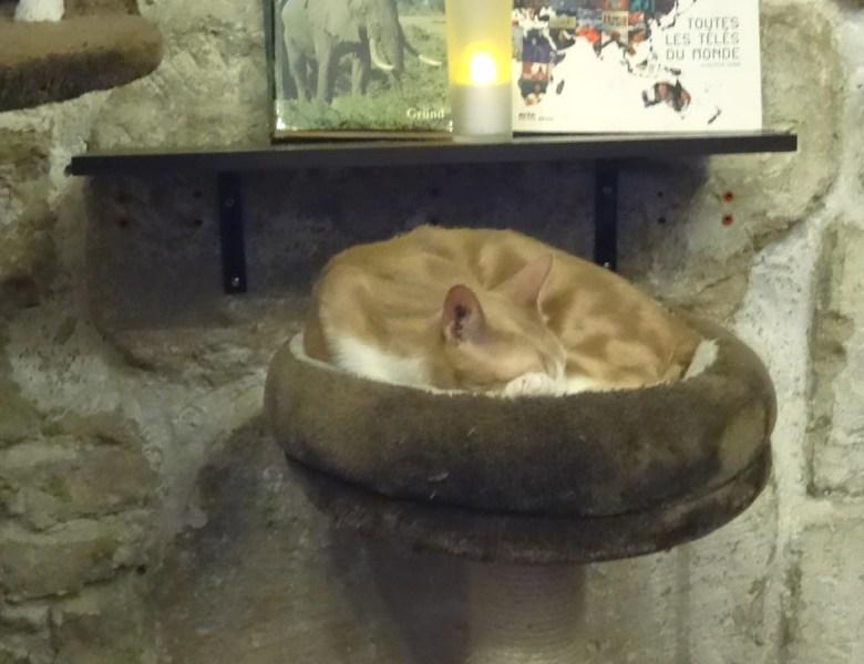 A Paris, le café des chats : avis mitigé.