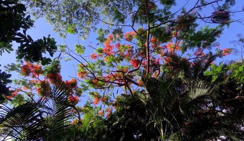#Guadeloupe : Promenade dans le jardin botanique de Deshaies