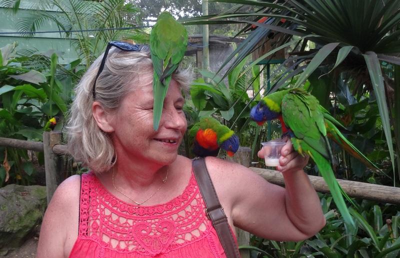 Loriquet au jardin botanique de Deshaie