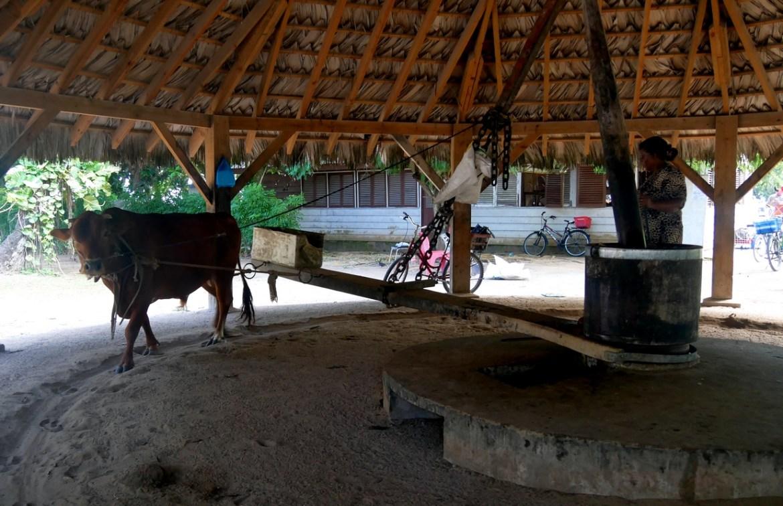 moulin traditionnel à coprah ile de la digue seychelles
