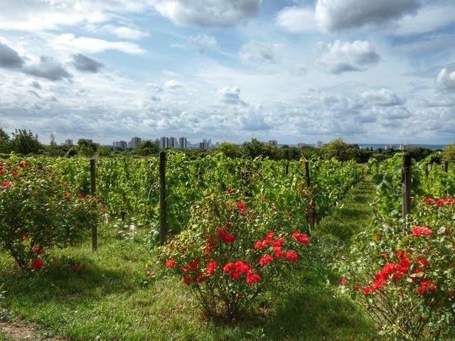 Les vignes d'Argenteuil