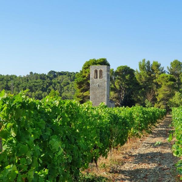 vignes près de Trebes Chateau saint-Jacques d'Albas Laure-Minervois