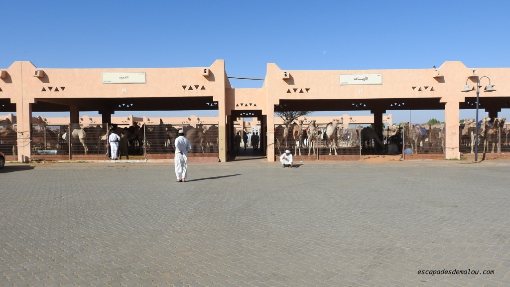 marché aux chameaux Al Ain