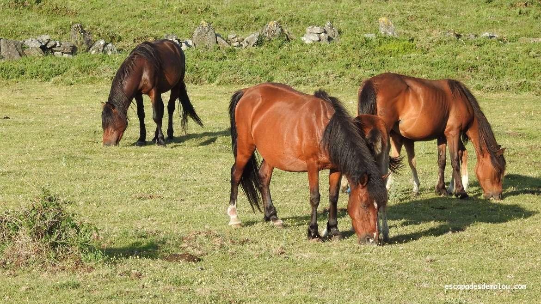 https://escapadesdemalou.com/le-garrano-un-petit-cheval-originaire-de-la-peninsule-iberique/