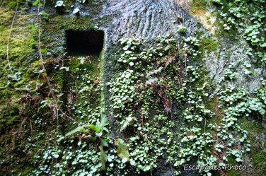 Locuon - ancienne carrière gallo-romaine