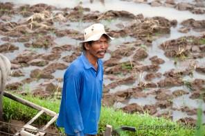 Jatiluwih - riziculteur
