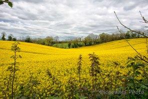 Querrien balade de Kérivarc'h : Entre vallon, ciel et colza