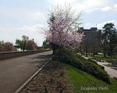 Arad - voie piétonne parc de Copilor