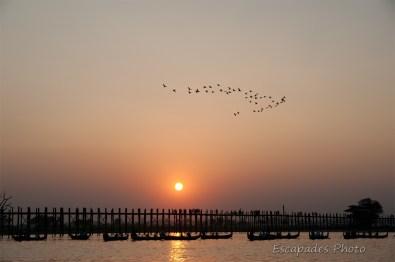 U Bein - vol d'oiseaux lacustres au coucher de soleil