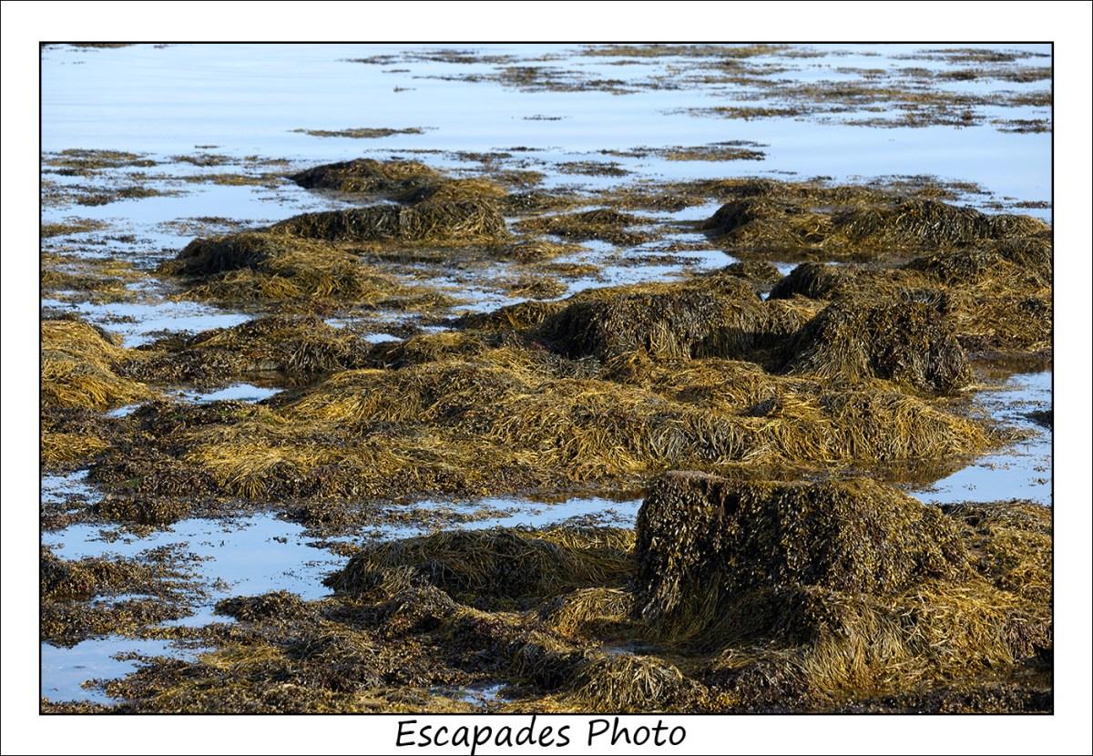 Kerity Penmarc'h - Haricots de mer sur les rochers