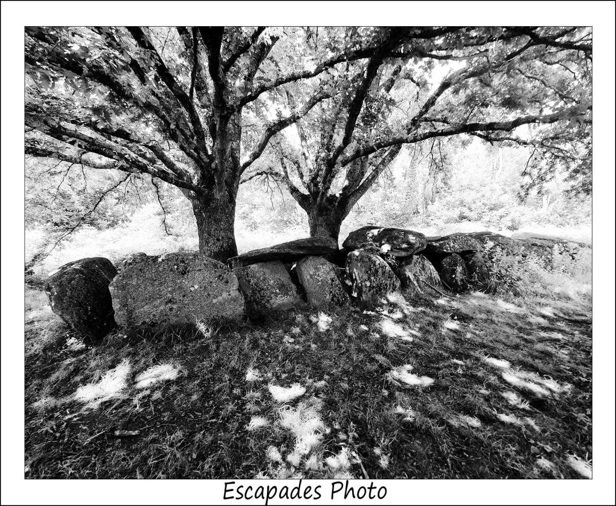 Allée couverte de Kermeur-Bihan et les deux chênes