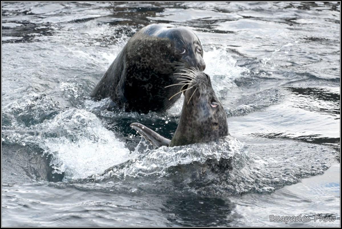 Nourissage des phoques Océanopolis