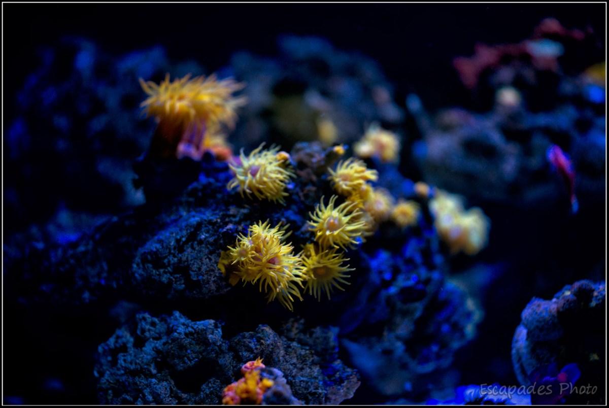 Océanopolis la lumière éclaire le corail