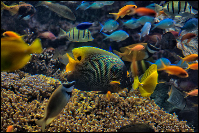 Poissons tropicaux de l'océan Indien et Pacifique – Océanopolis
