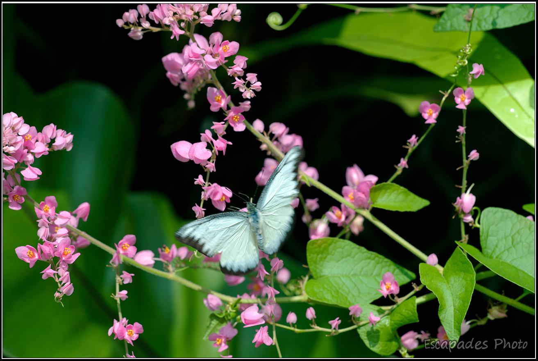 Parc aux Papillons Kuala Lumpur