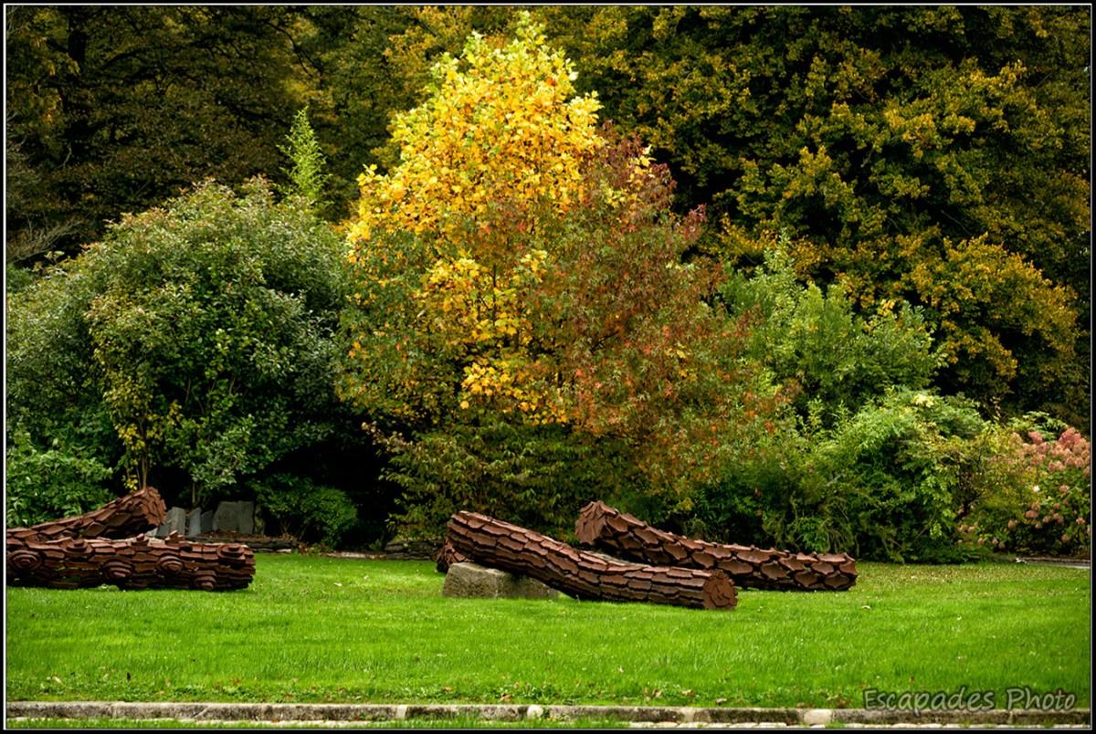 Marc Didou : troncs d'arbres dans le parc de Trévarez