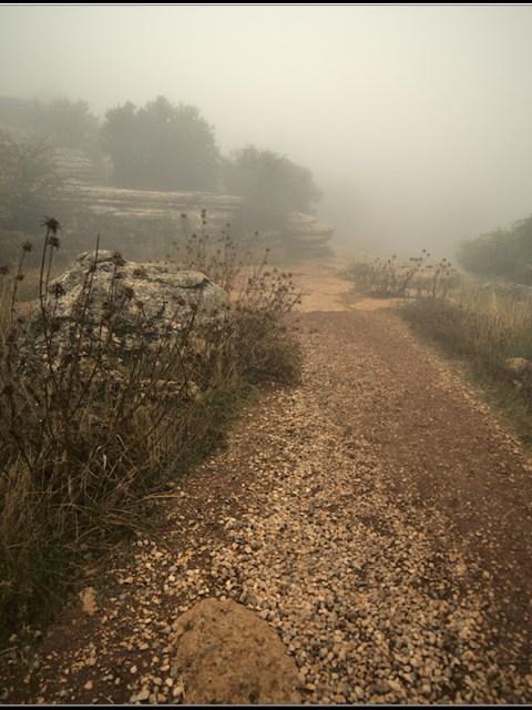 chemin pastoral dans la brume
