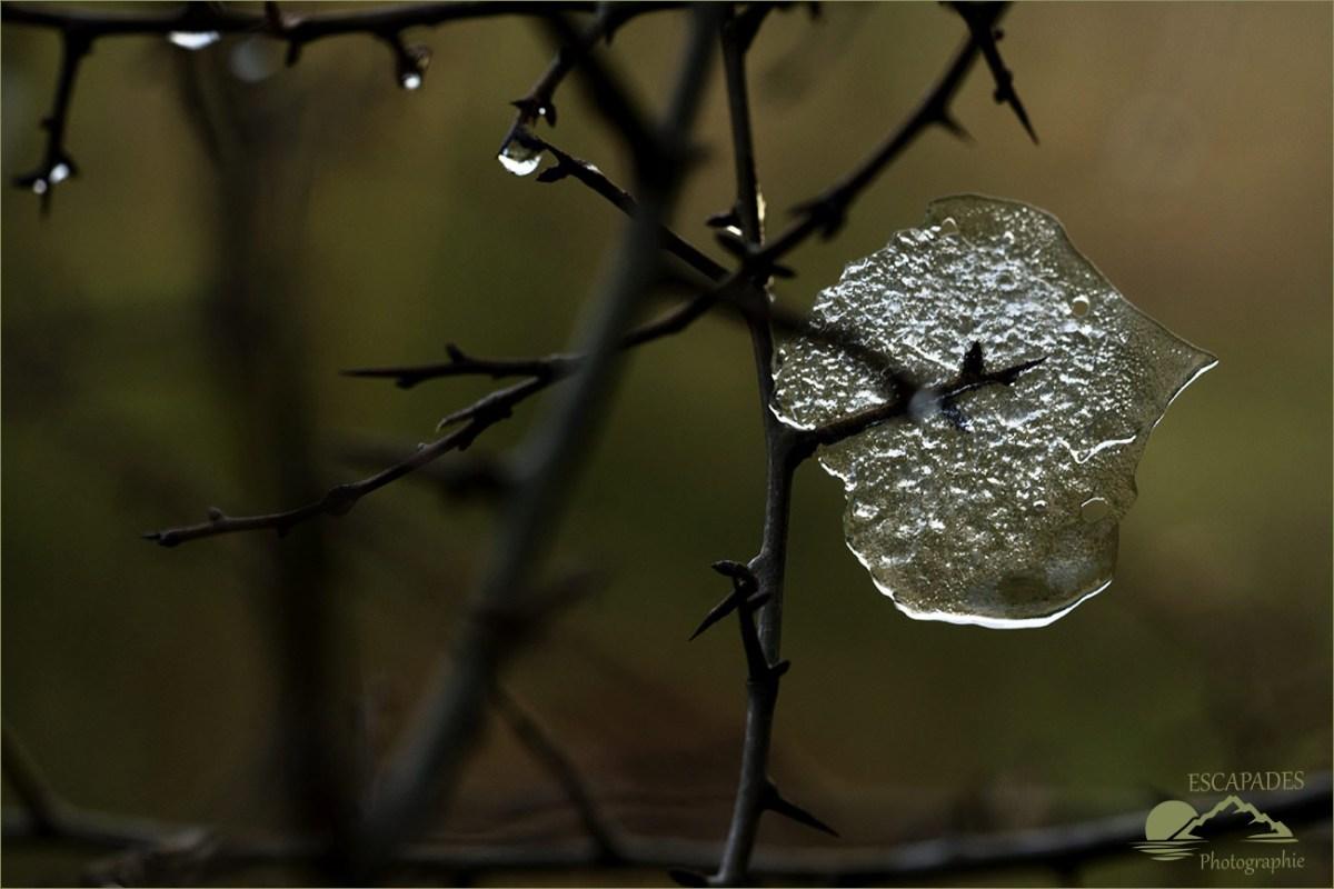 Givre : un vitrail nature pour un poirier sauvage