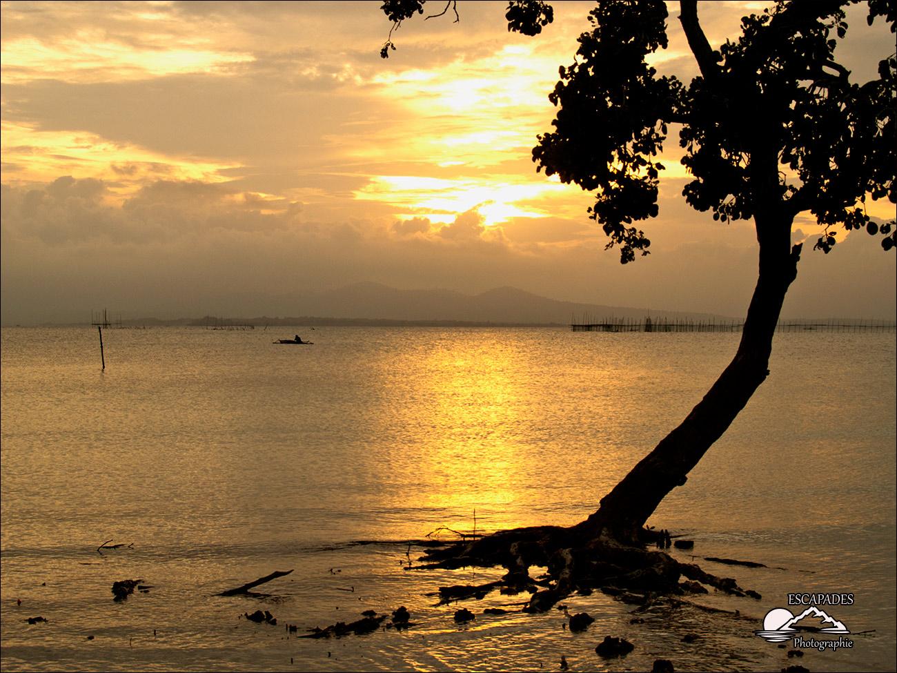 Puerta Princesa, coucher de soleil sur la mangrove