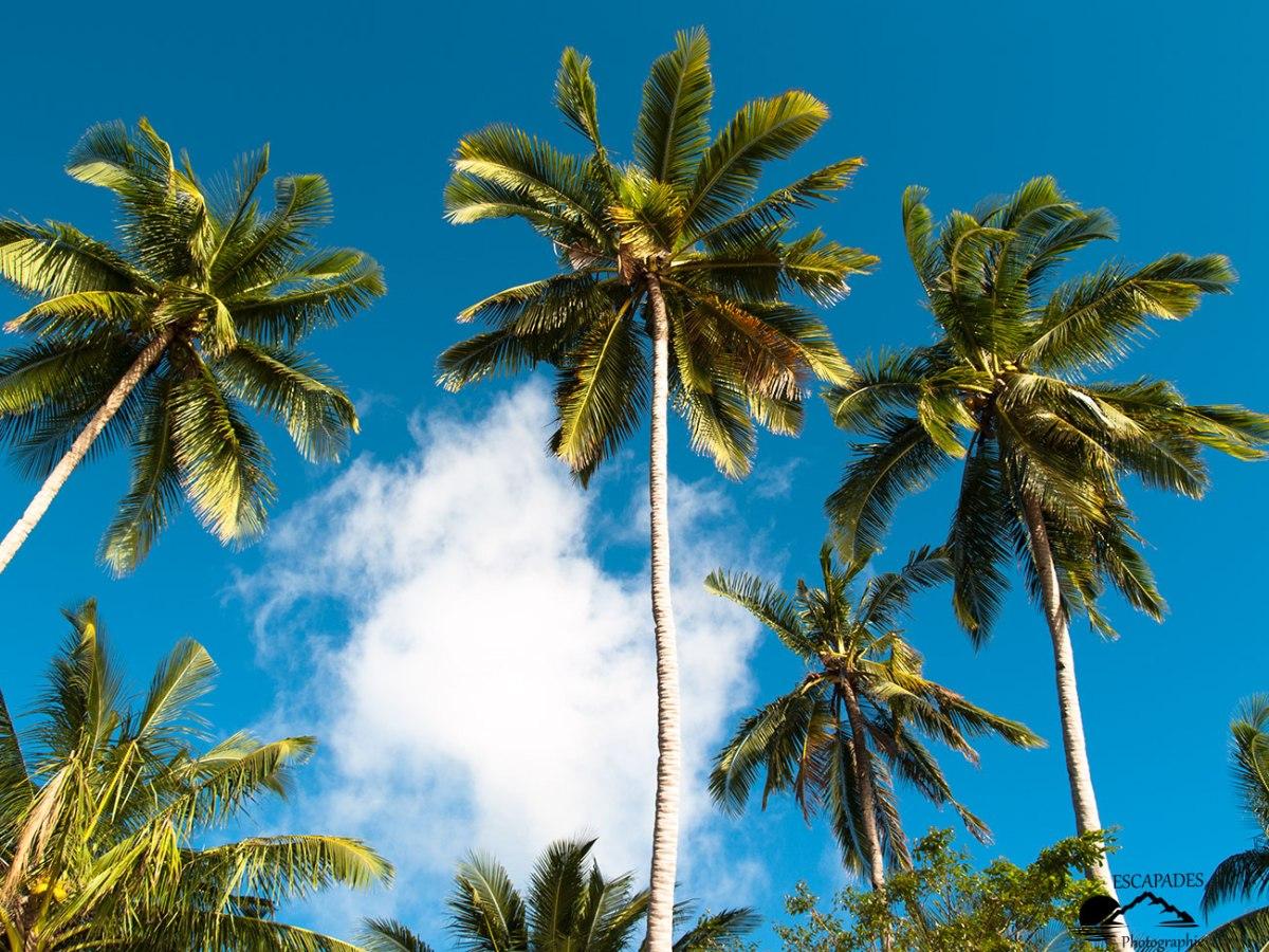 Les cocotiers de la baie d'El Nido