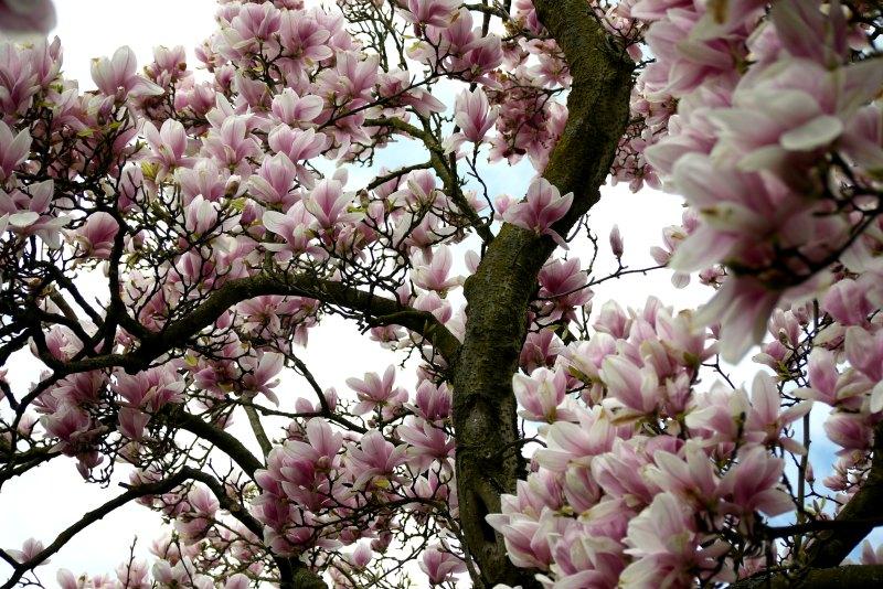 Ein Blütentraum in weiß und rosa.