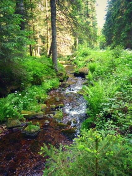 Wanderung um die Schwarzenbachtalsperre