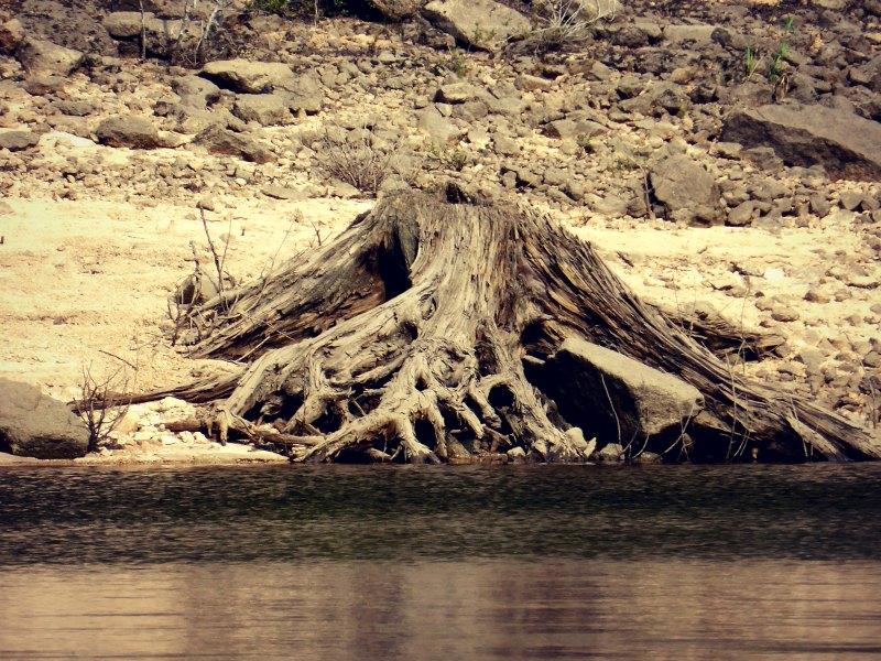 Abgestorbene Wurzeln am Seeufer