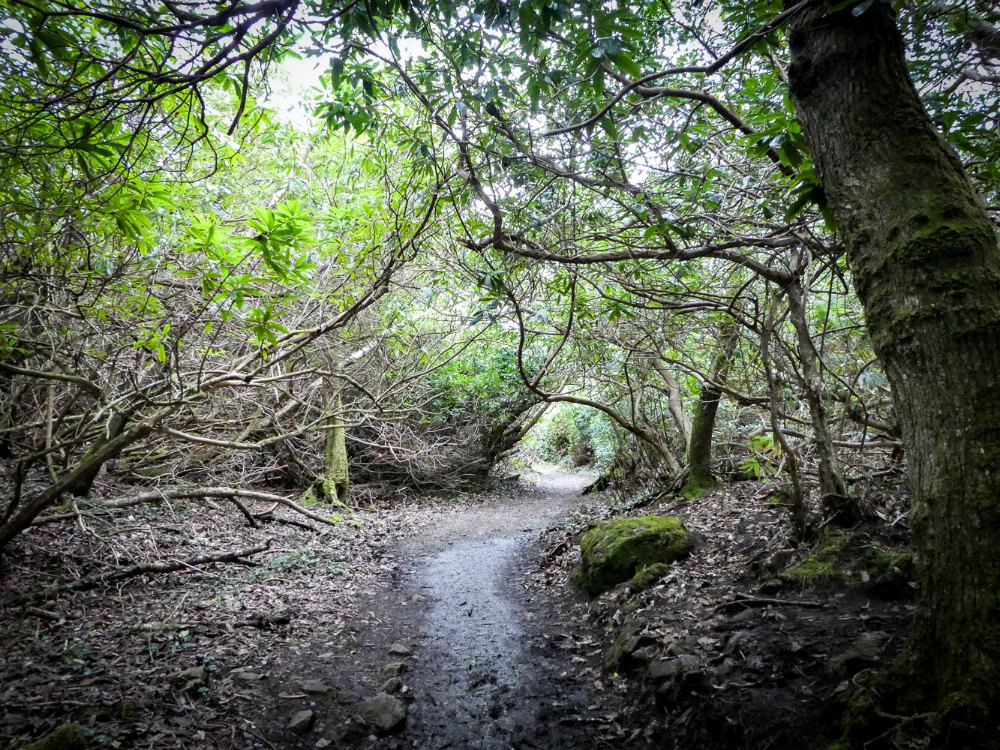 Fairy Walk, Parknasilla