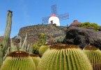 Lanzarote: Kakteengarten Jardin de Cactus