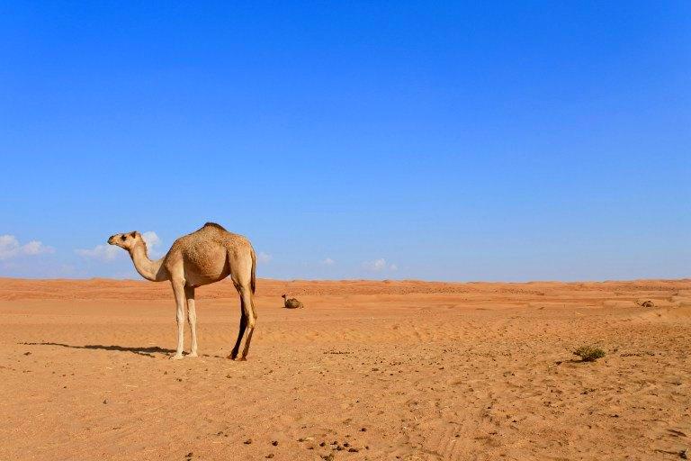 Roadtrip durch den Oman | Bild: Travellus