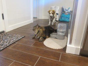 My captive audience...ok well they were chasing each other thru the kitchen, so that has to count for something, right?