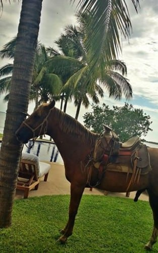 horse at casa aramara