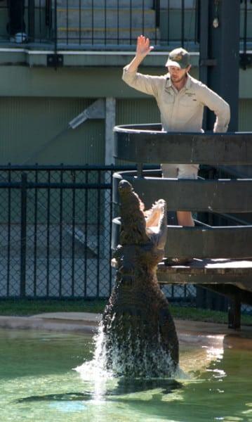 Australia Zoo 3525: Crocodile jumping