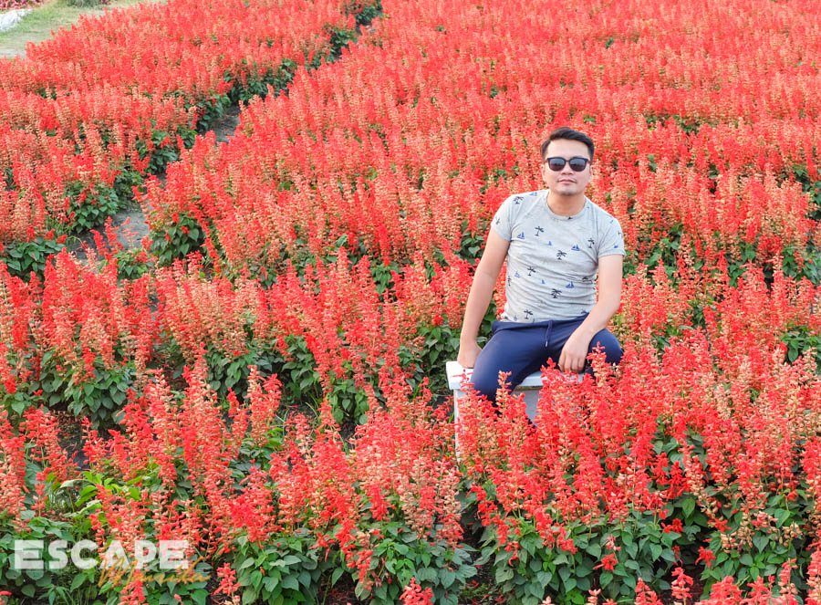 Houli Flower Garden