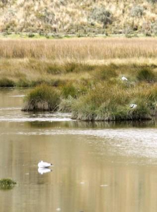 Limpiopungo es un hábitat de aves y patos