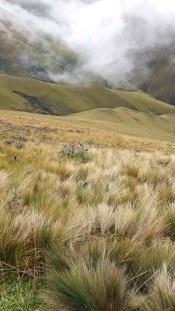 Pajas y ashpachocho, estrellas del paisaje de este páramo.