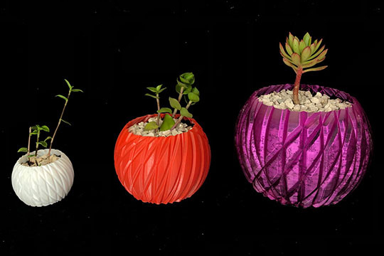 plantas-decorativas-Nativus.jpg