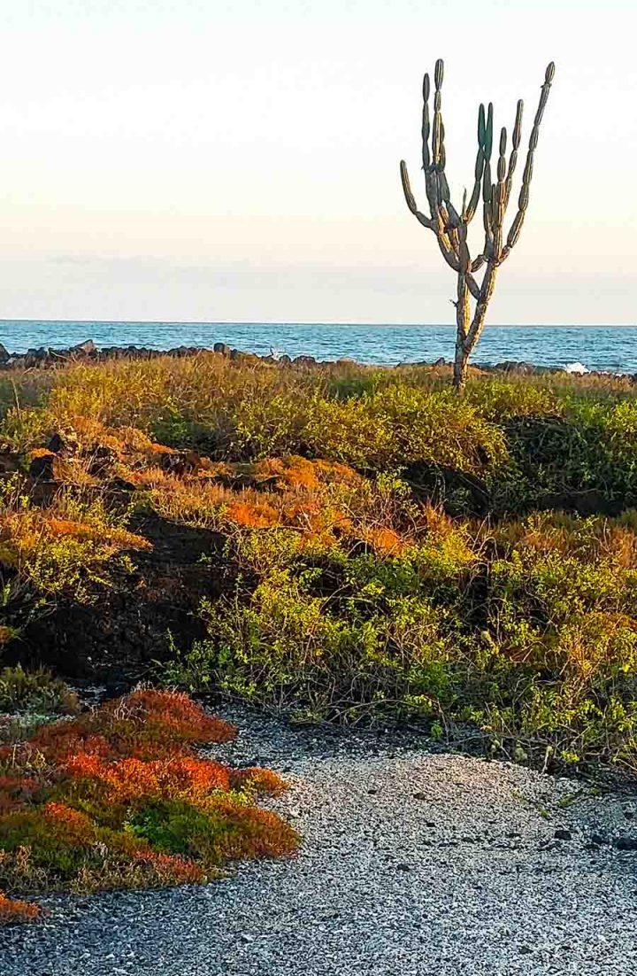 cactus playa isabela