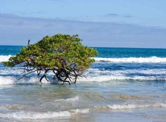 manglar isabela playa