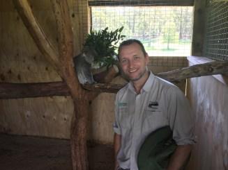 Joe with koala prior to release