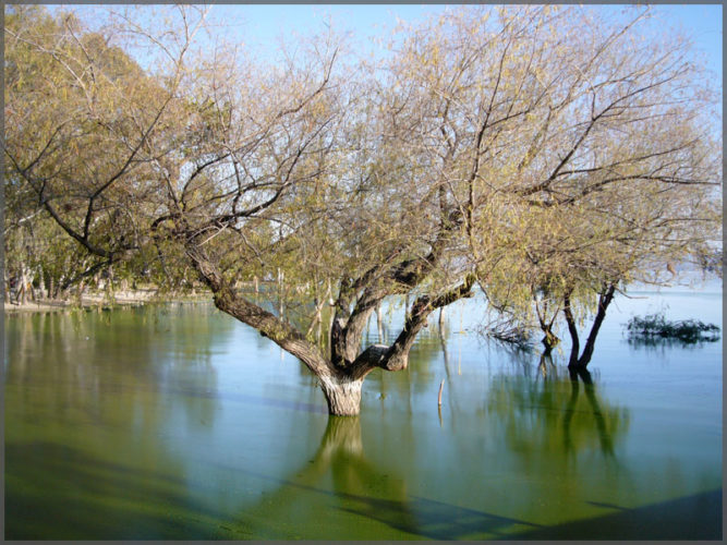 High water creating tree reflections on Lake Chapala in Ajijic.