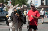Running of the Burros